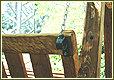 נדנדת עץ גושנית